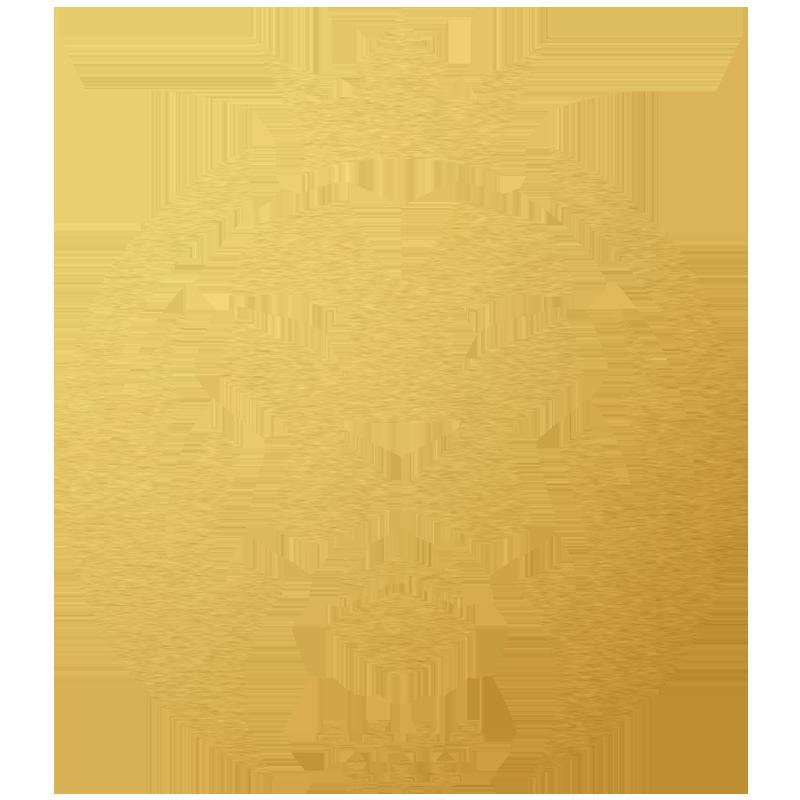 MAD Lions  Team